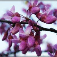 Итальянское цветение :: Galina Belugina