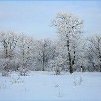 Зимнее убранство леса :: Михаил Пахомов