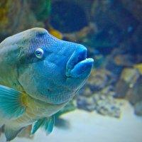 Жила была рыба... :: Николь ***