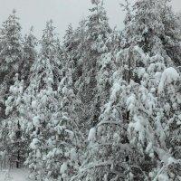 Настоящая зима в лесу) :: Татьяна Тимофеева