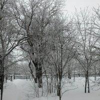 Яблоневый сад зимой :: Татьяна Тимофеева