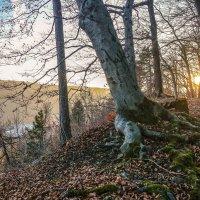 Декабрьский день в Тюрингском лесу. :: Александр Селезнев