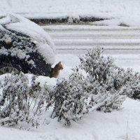 Тихо падал снег :: Татьяна Смоляниченко