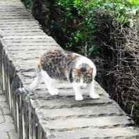 Осторожная кошка :: татьяна