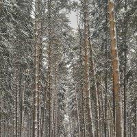 Когда деревья были большими... :: Alexandr Zykov