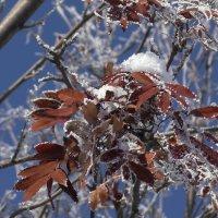 кружева зимы :: Евгений Фролов