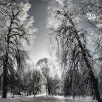 Морозное утро :: Елена Логачева
