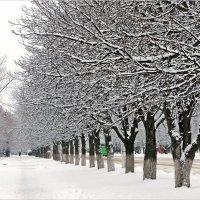 В январе- январе,  все деревья в серебре. :: Валентина ツ ღ✿ღ