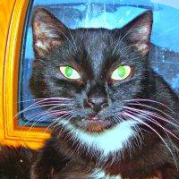Жил да был черный кот :: Надежда