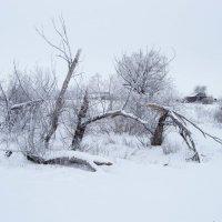 Зима :: Павел Кореньков