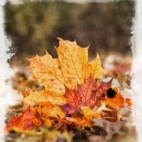 Осень, :: Alexander Dementev