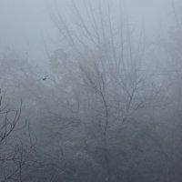 Утро туманное :: Светлана
