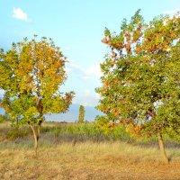 Осень :: santamoroz