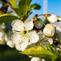 В мечтах о весне :: Ирина Остроухова