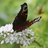 Бабочка :: Наталья Березко