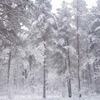 А зима будет большая :: Валентина Ломакина