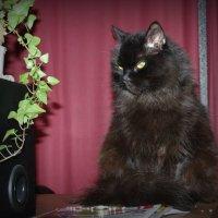 Все тот же пожилой котик :: Натали Пам