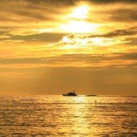 По золотому морю :: valeriy khlopunov