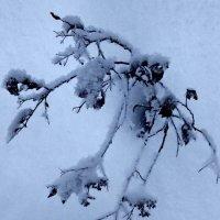 Зимний букет :: Tanja Gerster
