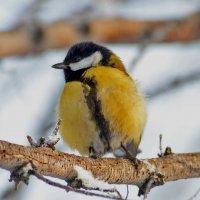 Про грустную пташку расписную :: galina tihonova