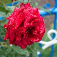Плачущие цветы. :: santamoroz