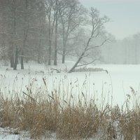 Снегопад :: Наталья