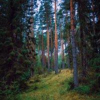 Средь сумрака леса :: Любовь