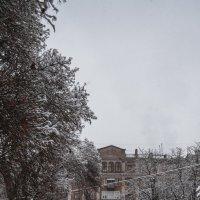 зима в городе :: Алина Гриб