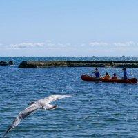 С чайкой наперегонки по оз.Онтарио! Семейный отдых на воде. :: Юрий Поляков