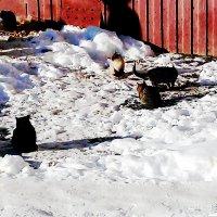 Бездомные кошки :: Владимир Ростовский