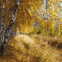 В золотом наряде :: Владимир Макаров