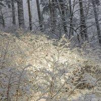 В зимнем парке :: Леонид Соболев