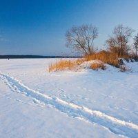 Зимний пейзаж :: Валерий Кишилов