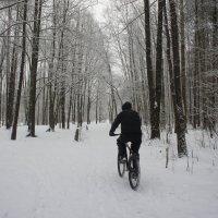 Пришла зима - доставай велосипед! :: Елена Павлова (Смолова)