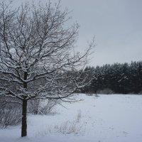 Прогулка в заснеженный лес :: Елена Павлова (Смолова)