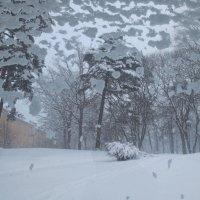 снег-снег :: Елена