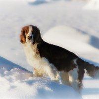 в снегах :: liudmila drake