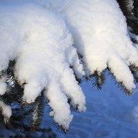 Так тихо,  на  мягких лапах,  зима  подошла... :: Валерия  Полещикова