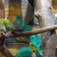 Любовь по птичьи :: Наталья Джикидзе (Берёзина)