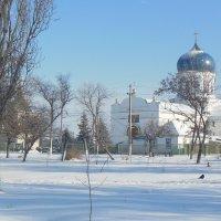Январь - природа торжествует :: Ирина Диденко