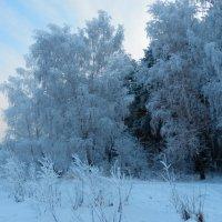 В морозный день :: Владимир Звягин
