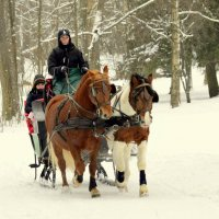 Лошадки зимой  /2/ :: Сергей