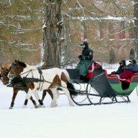 Лошадки зимой   /4/ :: Сергей