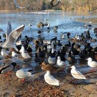Птичий базар :: Nina Yudicheva