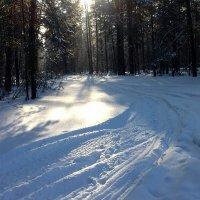Дорога для квадроциклов в лесу. :: Мила Бовкун