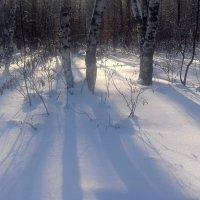 Солнечный , морозный день. :: Мила Бовкун