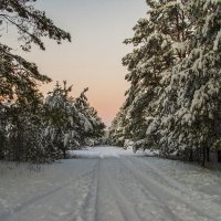 Зимнее утро в лесу :: Елена Пономарева