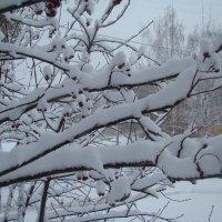Снежно...в городе :: марина ковшова