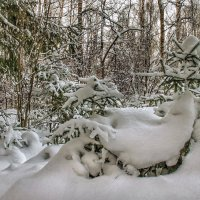 Снежный этюд :: Va-Dim ...