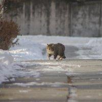 Зимний котэ :: Лилия Гиндулина